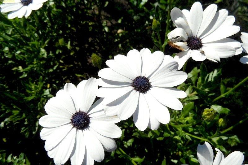 Weiße Blüten 42, Kalenderwoche 2014