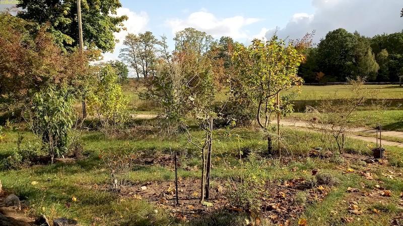 Herbst Blick nach Osten Apfelbäume und Forsythien 42. Kalenderwoche 2020
