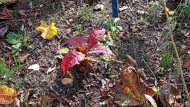Herbstliche Blattfärbung 42. Kalenderwoche 2020