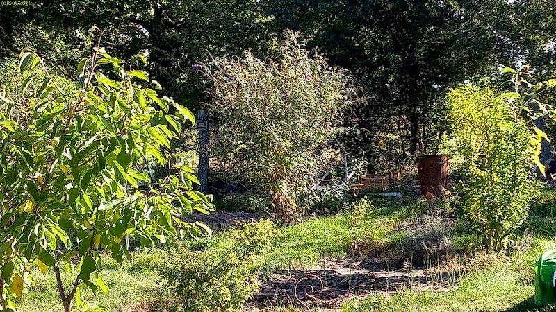 Kirsche, Sommerflieder, Hibiscus 4.10.20