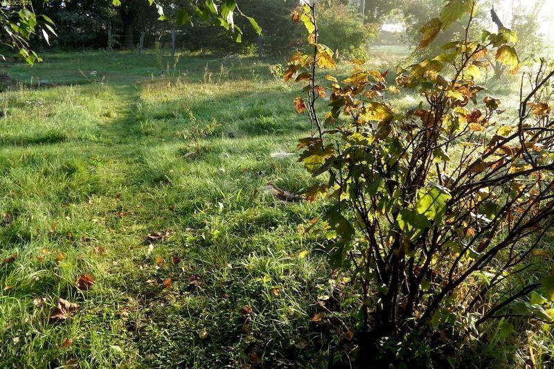 Gartenblick am Morgen September 2013