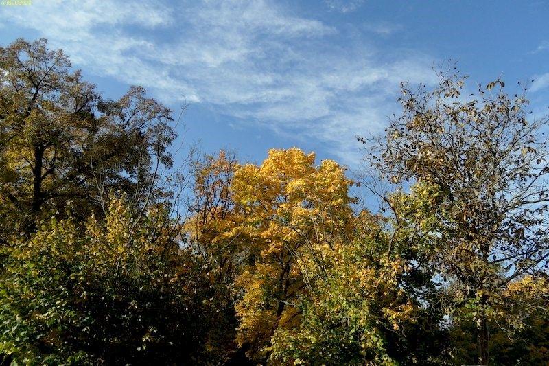 Blick von der Terrasse Oktober 2013