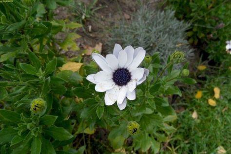 Weiße Blüte im November 2014
