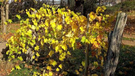 Wein im Herbst 45. Kalenderwoche 2020