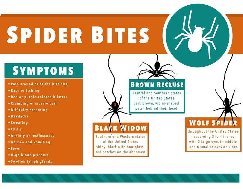 Wolf Spider Bite Treatment: Home Remedies and Prevention