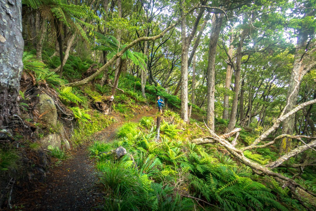 Section of Trail with Ben Campbell on Stewart Island
