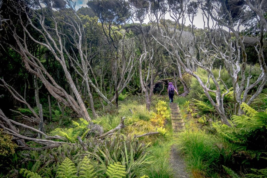 Wind blown trees on Stewart Island