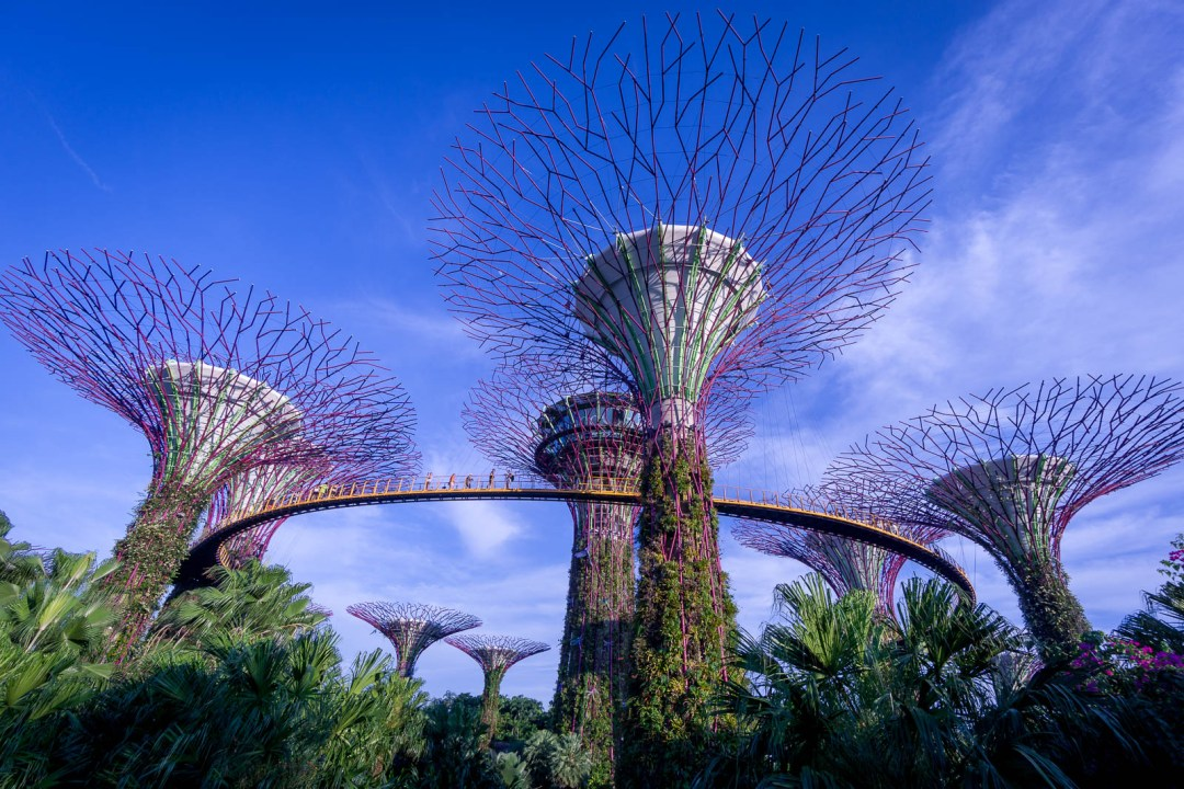 Garden by the Bay Supertree Grove
