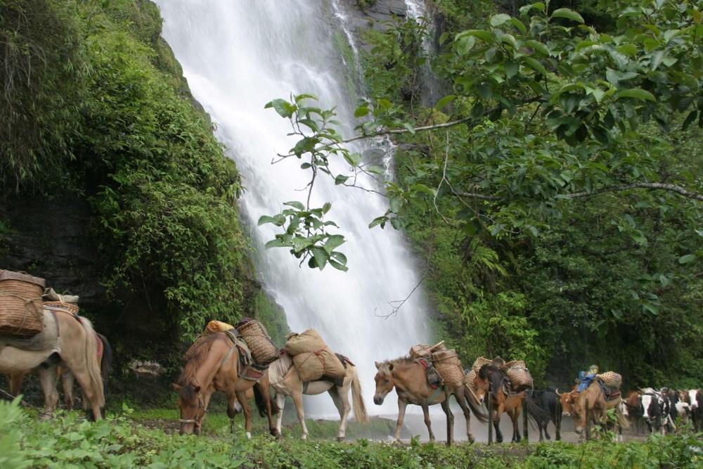 Bhutan Trekking Horse Carrying Supplies