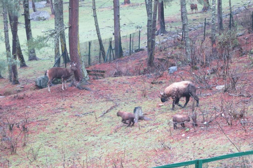 Motithang Zoo
