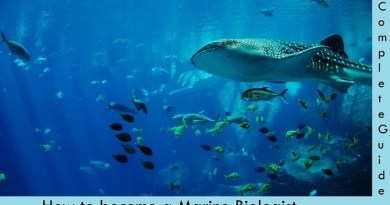 Marine Biologist career path
