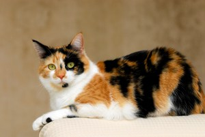 unique calico cat names 44 perfect names to check out