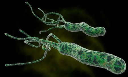 5 Best Home Remedies For H Pylori Bacteria