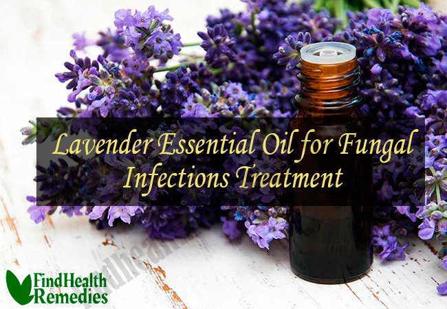 lavender-essential-oil-for-fungal-infections-treatment