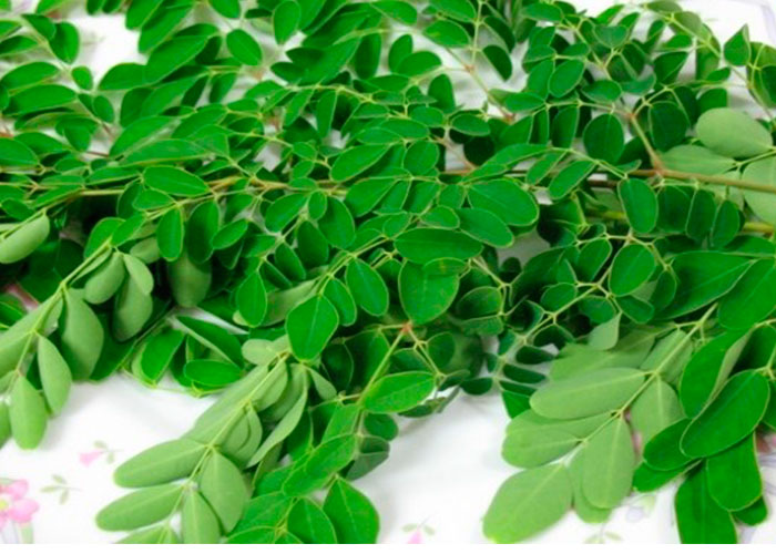Drumstick Leaves for TB (Tuberculosis)