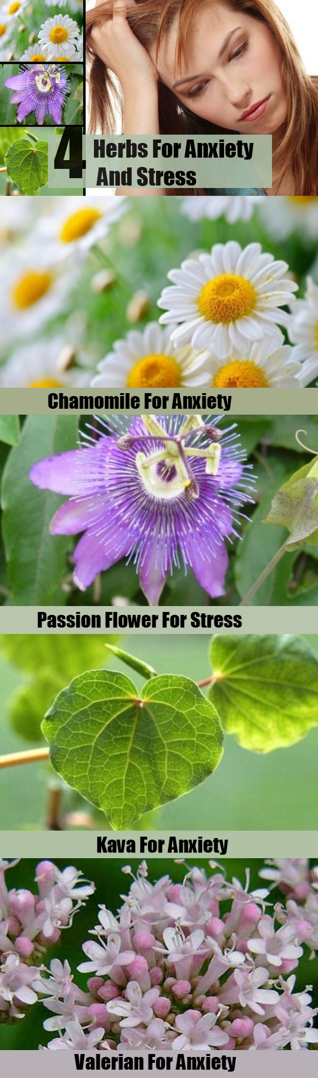 4 Herbs For Anxiety And Stress