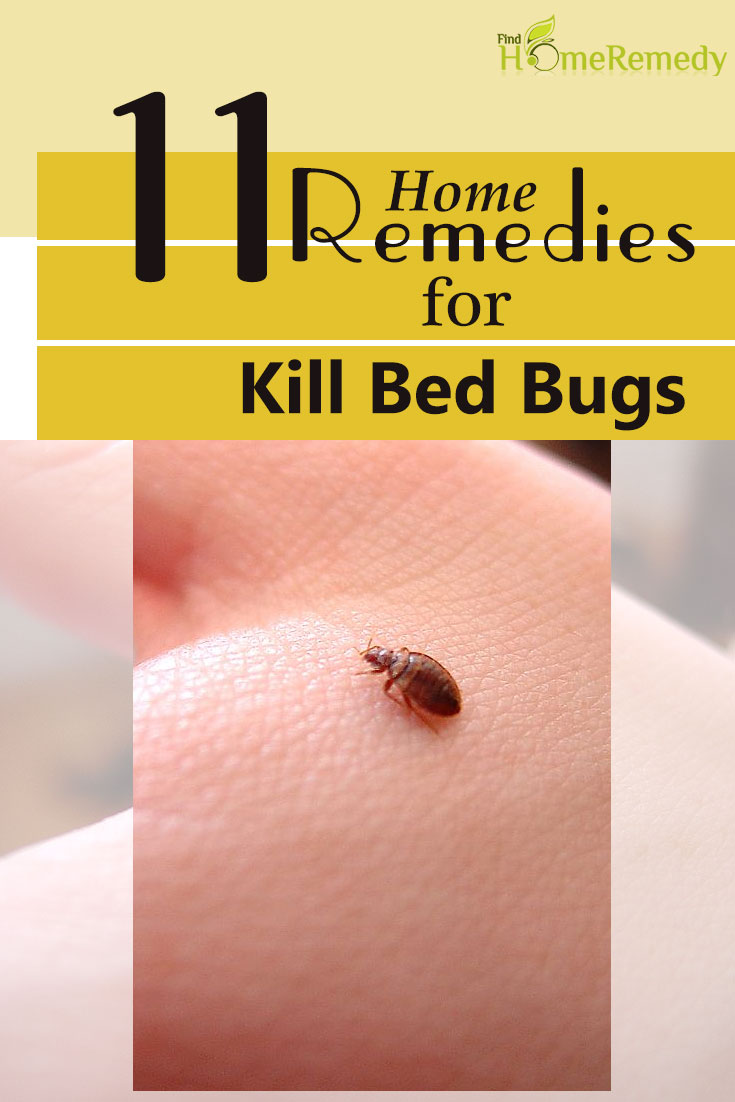 11 home remedies to kill bed bugs natural treatments cure for it can be a really scary experience when your house is infested with bed bugs complete eradication of the parasite is extremely difficult and in some cases ccuart Choice Image