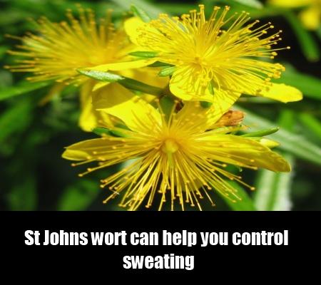 St Johns Wort