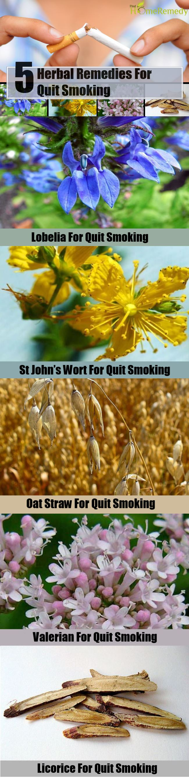 5 Herbal Remedies for Quit Smoking