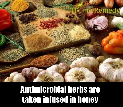 Antimicrobial Herbs