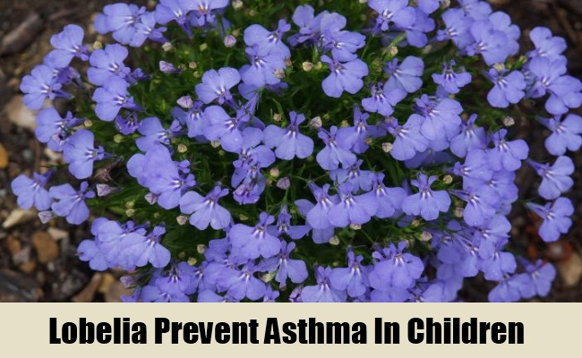 5 Herbal Remedies For Asthma In Children Treatments Cure For