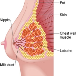 Natural Home Remedies For Mastitis