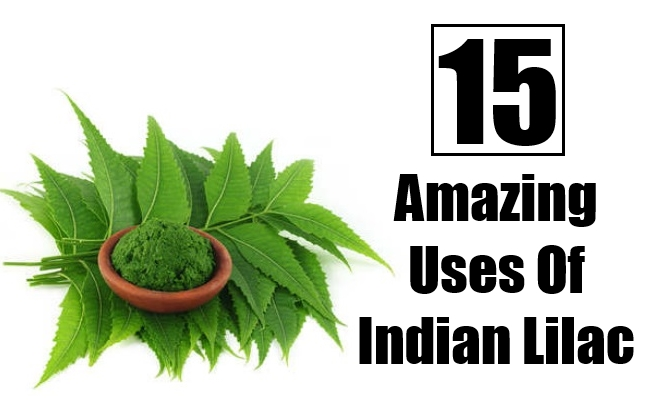 Amazing Uses Of Indian Lilac