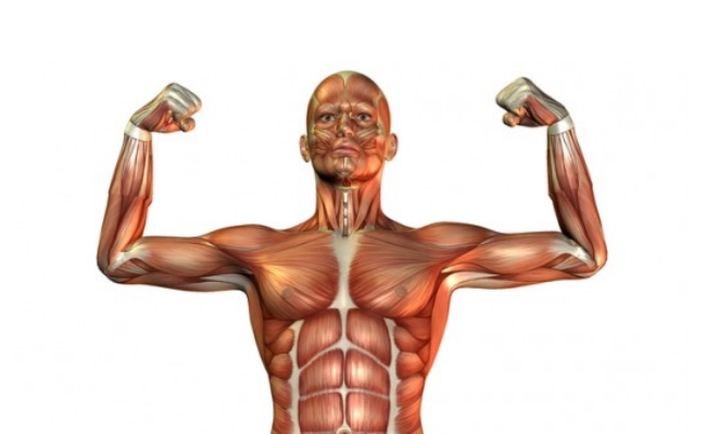 Incorporate A Strenuous Muscle Building Program