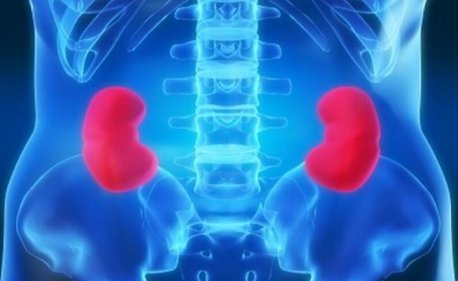 Kidney Damage