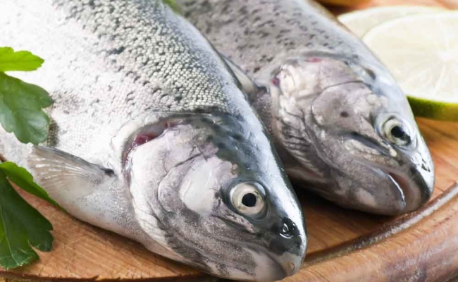 Farmed Rainbow Trout