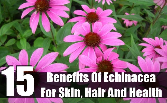 Benefits Of Echinacea For Skin, Hair And Health