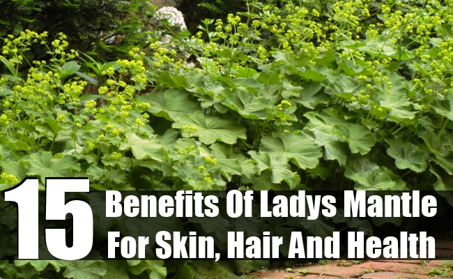 Benefits Of Ladys Mantle For Skin, Hair And Health