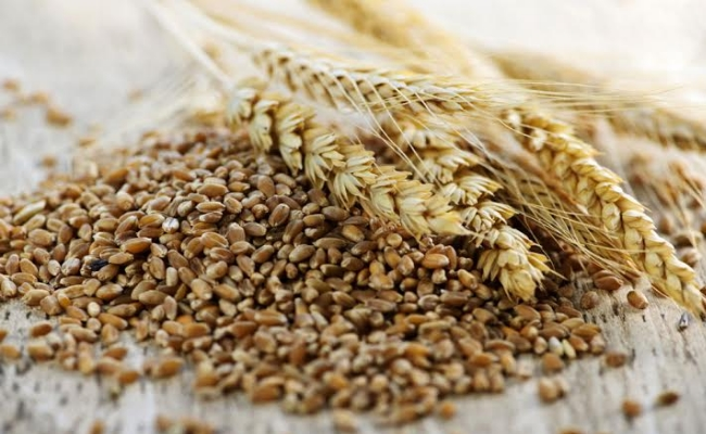 Benefits Of Triticale
