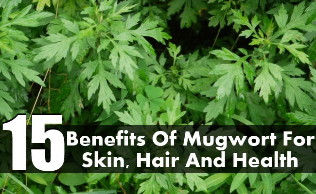 Mugwort For Skin, Hair And Health