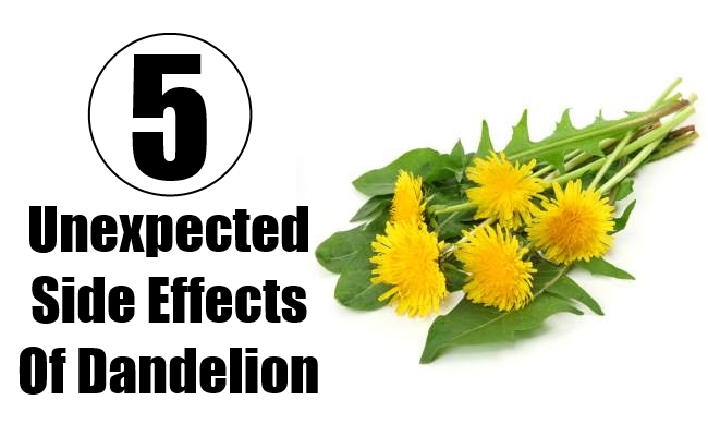 ... Unexpected Side Effects Of Dandelion | Find Home Remedy & Supplements