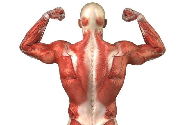 Tightens Muscles