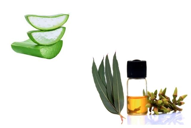 Aloe Vera And Eucalyptus Oil Mask