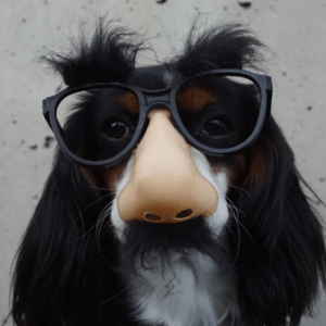 Square incognito doggy