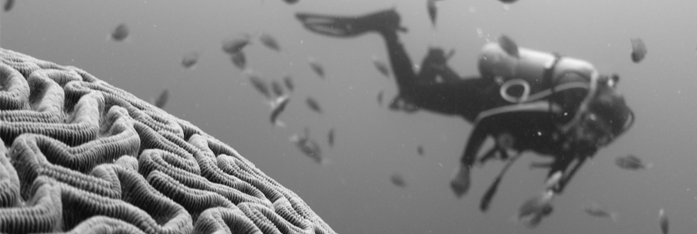 Black and white image of diver and brain coral used to illustrate poem about ADHD on Finding My Float blog