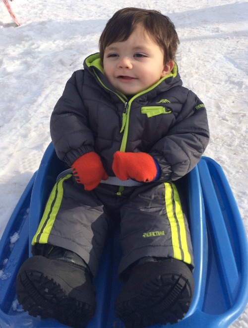 dante on sled