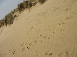 Sandy Beach View at Camber Sands - Camber Sands Holiday Park