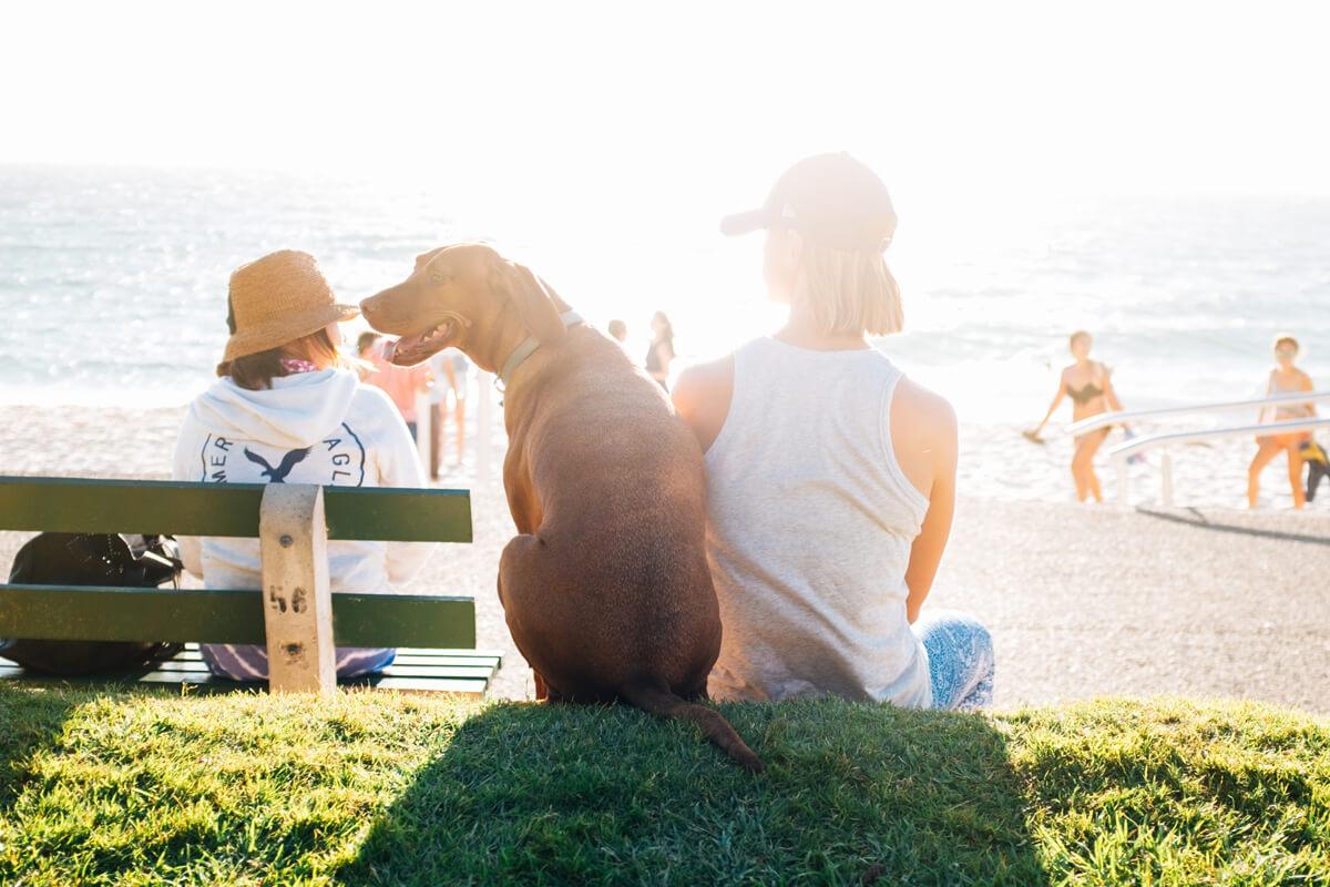Coast View Dog Friendly