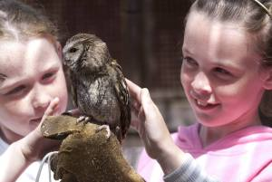 Birds of Prey - Kielder Lodges Holiday Park