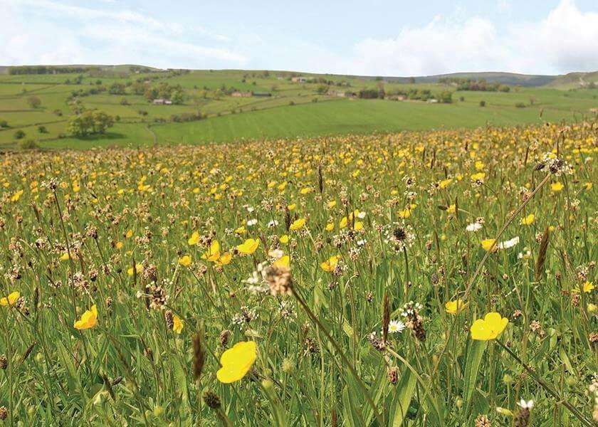 Longnor Wood Field