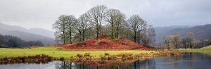 Cumbria Trees