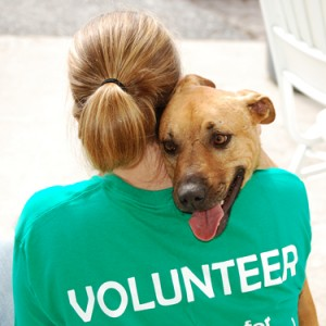 Animal Volunteering Resume Templates
