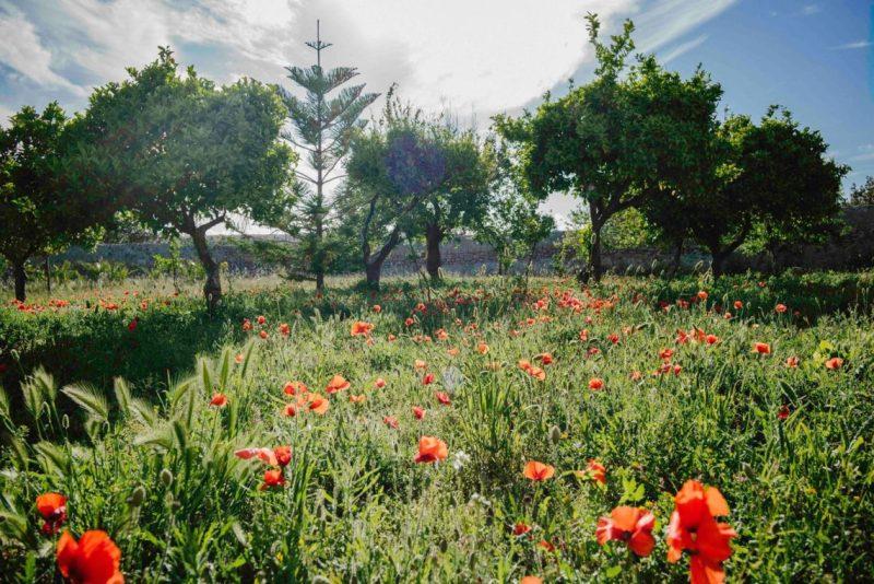 Destination Retreats - Yogascapes Retreat Sicily, Italy