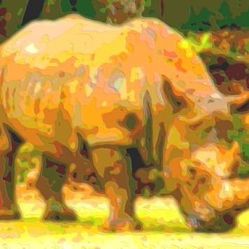 Animal Portrait Art Rhinoceros
