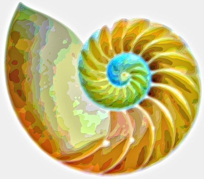Spiral Seashell Layer Art Print