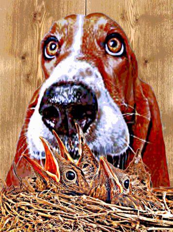 Animal Art Adoption